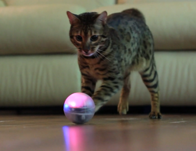 A cat plays with a robotic ball