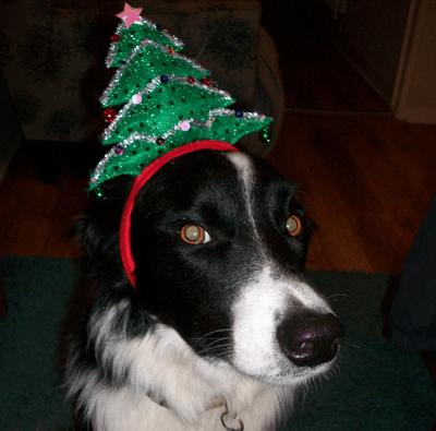 A dog wearing a festive hairband