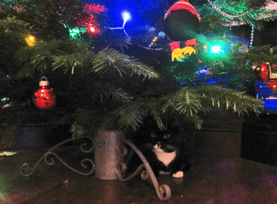 A black and white cat under a tree