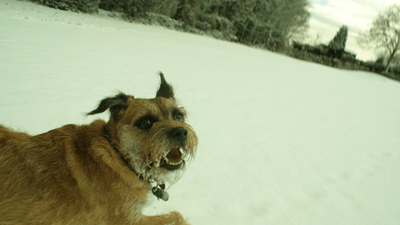 A dog running across snowy pastures