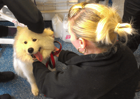 A DAY AT A CANINE RESCUE CENTRE