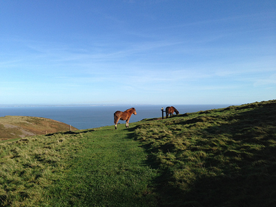 Exmoor coast with ponies