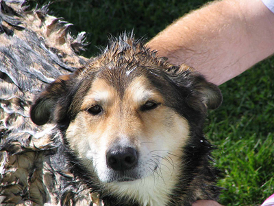 Dog being washed
