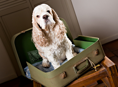 A dog in a suit case