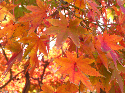 Autumn leaves (Photo: Marufish)