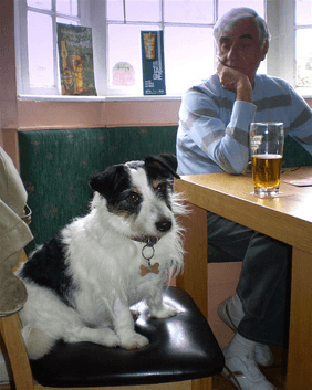 dogs in pubs