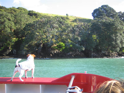 Image of a dog on holiday - Nicki-G