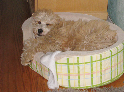 Image of dog bed - vidalia-11