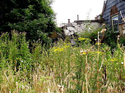Image of overgrown garden