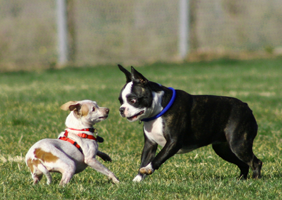 Image of dogs frolicing in a park