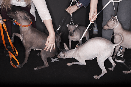 Image of dogs backstage at Crufts