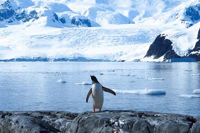 Polar explorer-Andreas Kambanis