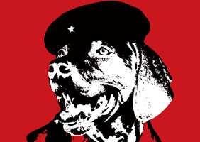 Image of Che Guevara dog