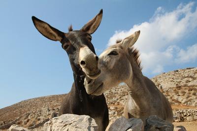 Donkeys - Klearchos Kapoutsis
