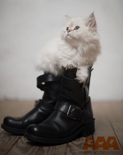 Cat-AAA kraked