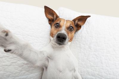 Selfie_dog kraked