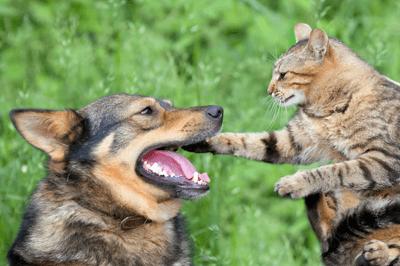 aggressive_pets