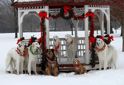Festive dogs around bandstand