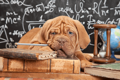 Dog in a classroom