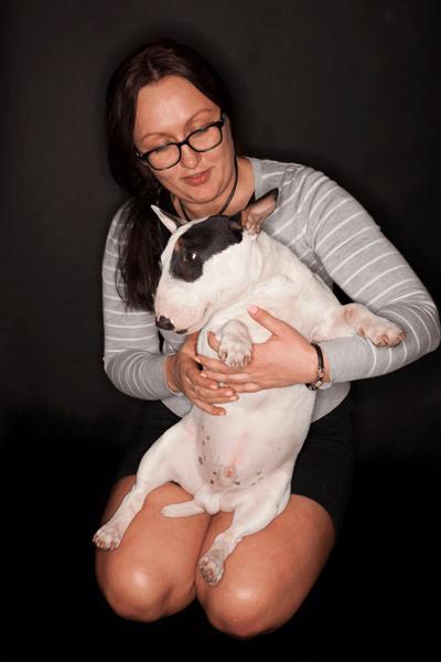 Owner holding English bull terrier