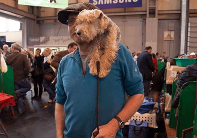Dog on owner's shoulder