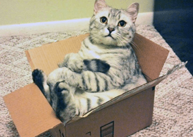 Cat sat in a small box
