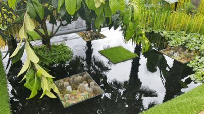 Image of a sunken garden in a pond