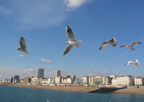 Image of Brighton seafront