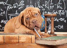 Image of a puppy taking an advanced maths lesson