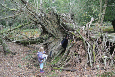 Image of child frolockiing in the New Forest