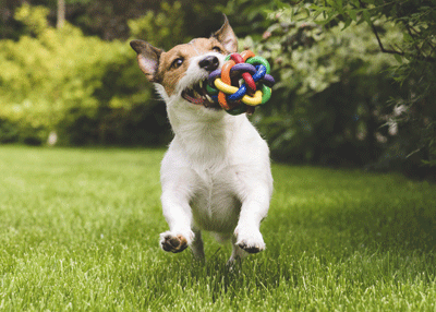 Image of a dog having a great time