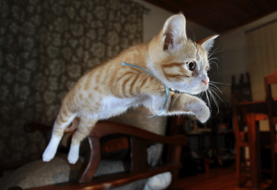 Image of a kitten leaping through the air