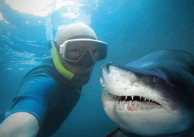 Image of a man taking a selfie with a shark