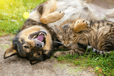 Image of a cat and dog sharing a joke