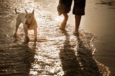 Image of a dog and owner on the beach