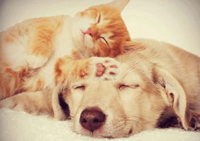Image of a dog and cat having a snooze