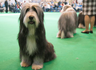 Image of a dog that looks like Gandalf