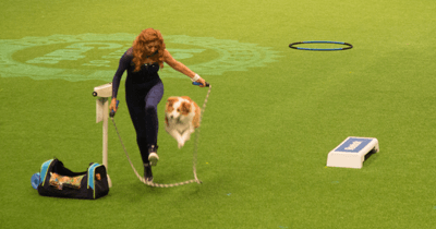 Image of 'heelwork to music' with a dog skipping