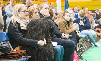 Image of a Puli sitting on a woman's lap