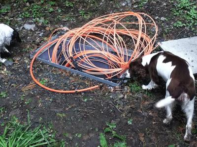 Image of dog investigating broadband wire