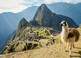 A llama standing in front of Machu Picchu