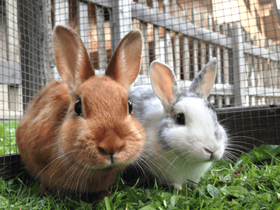 Image of two fluffy bunnys