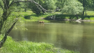 Image of a deer in Mirror Lake