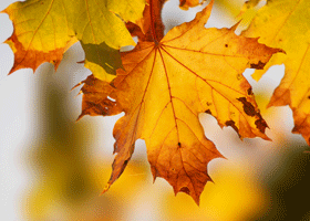 Image of an autumnal leaf