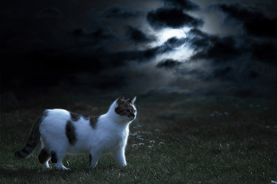 Image of a cat walking in the dark