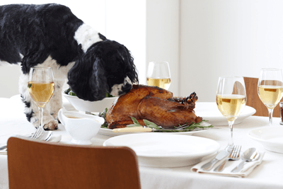 Image of a dog looking at a cooked turkey