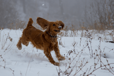 Image of a happy dog in the snow