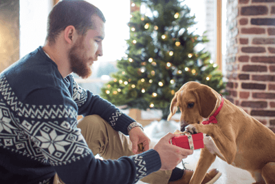 Image of a dog and man looking at a gift