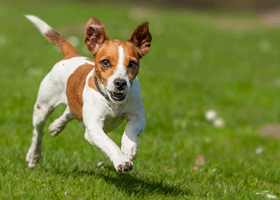 Image of a dog running