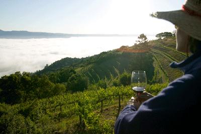 Image of a vinyard in California